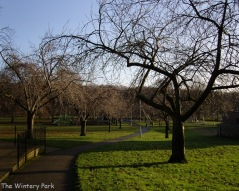 Winter sunshine in the park