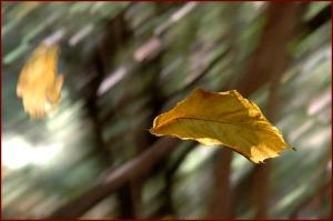 windy leaves