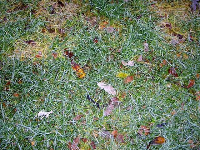 Can you see the frost?