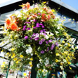 View Halifax in Bloom
