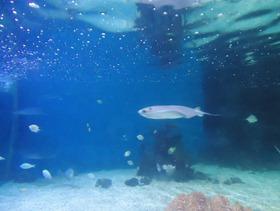 Sea Life at Scarborough